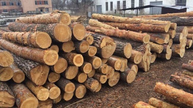 Суд ЕС признал запрет на экспорт леса-кругляка из Украины незаконным